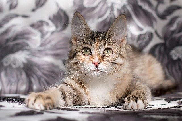 Нежный и трогательный котенок Мия в добрые руки