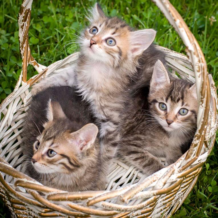 Отдам хорошеньких котят в дар