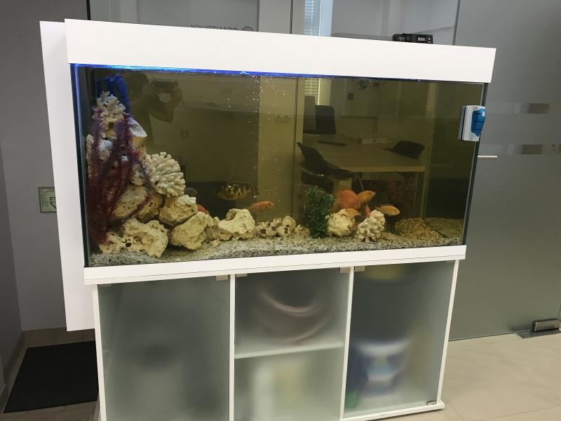 Аквариум с рыбами, полный комплект