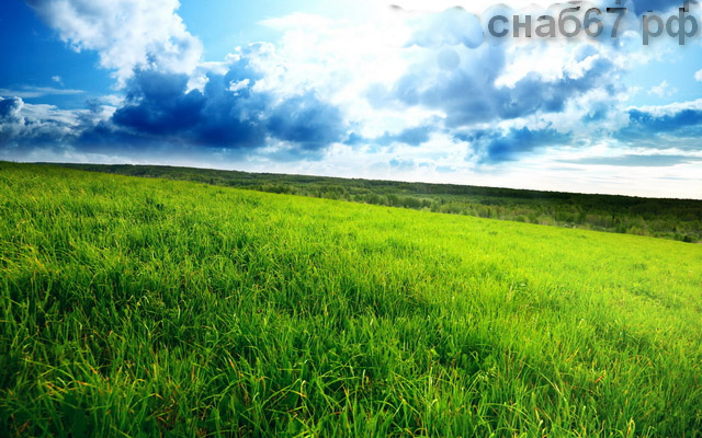 Семена кормовых трав и кормовые травосмеси.