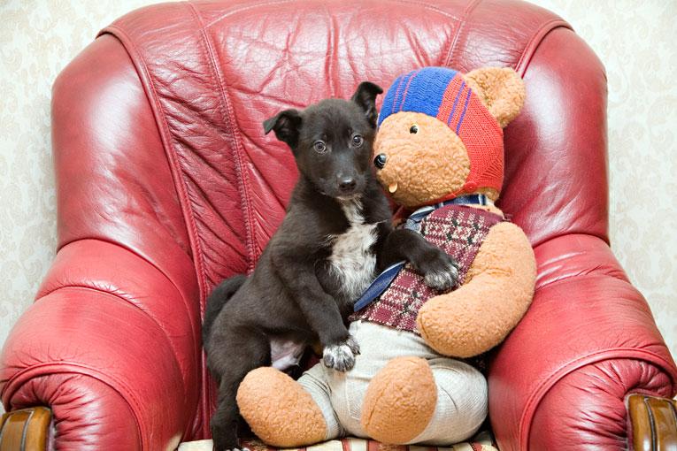 Хорошенький щенок в чрном фраке в дар