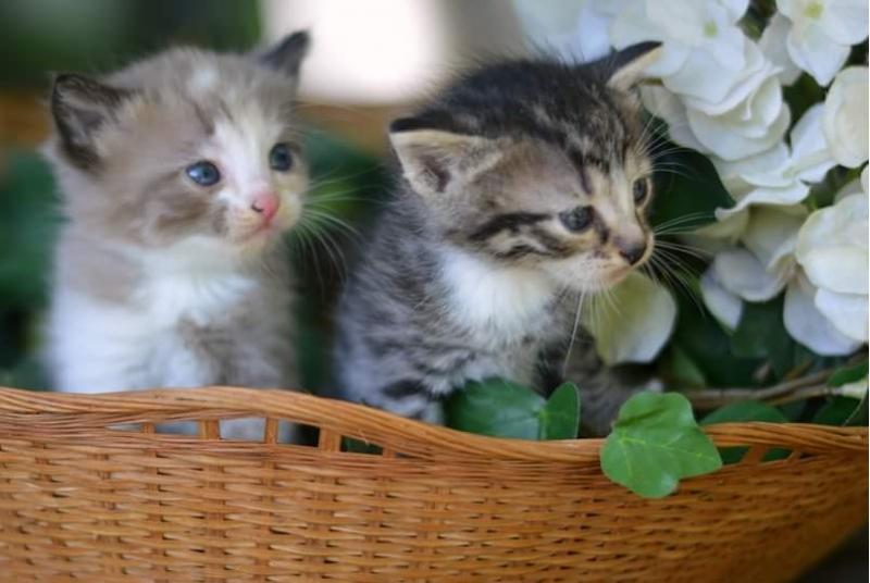 Крошки-котята ищут хозяев. 1 месяц