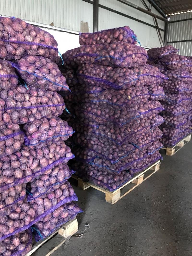 Картофель нового урожая оптом