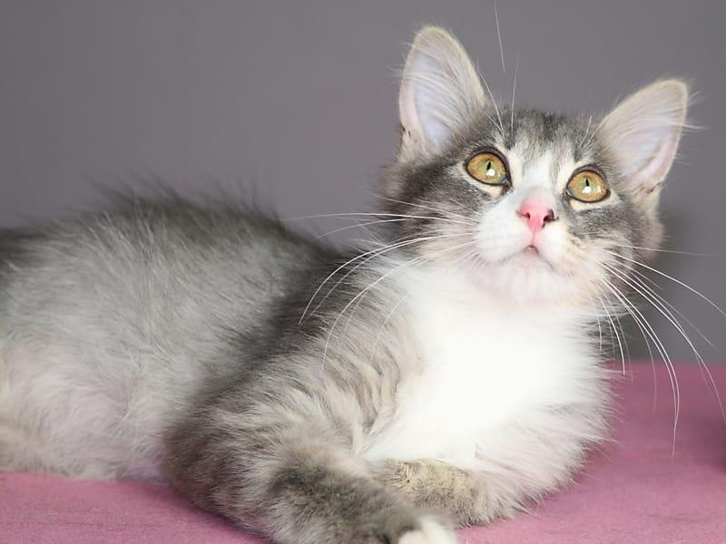 Ласковый красивый котенок Венечка в дар