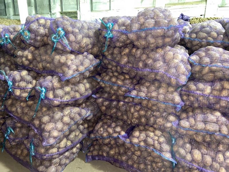 Картофель оптом от 5 р